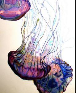 Jellyfish: Colored Pencils
